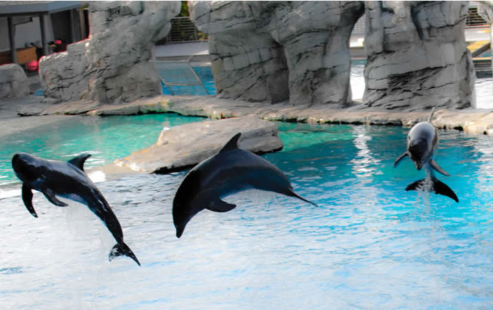 Delfini parco acquatico riviera romagnola